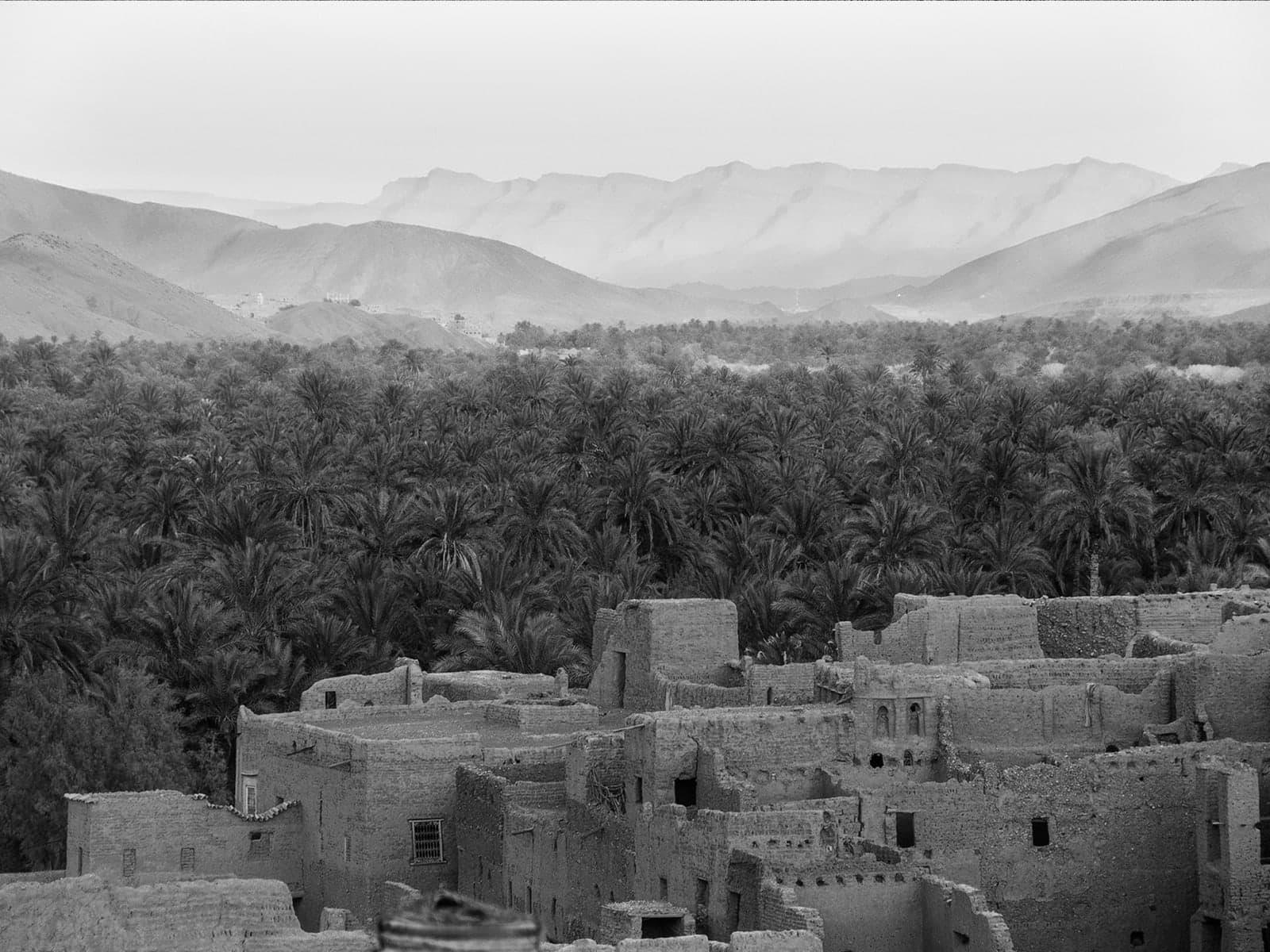 موقف السعودية من تشجير المدن